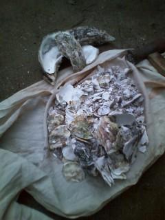 牡蠣殻石灰