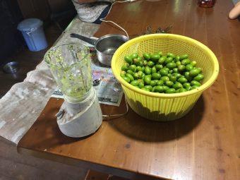 引き続き柿渋作り