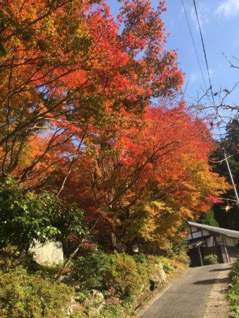 紅葉シーズン到来!